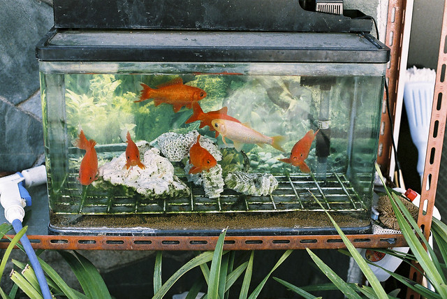 Outdoor fish tank flickr photo sharing for Outside fish tank