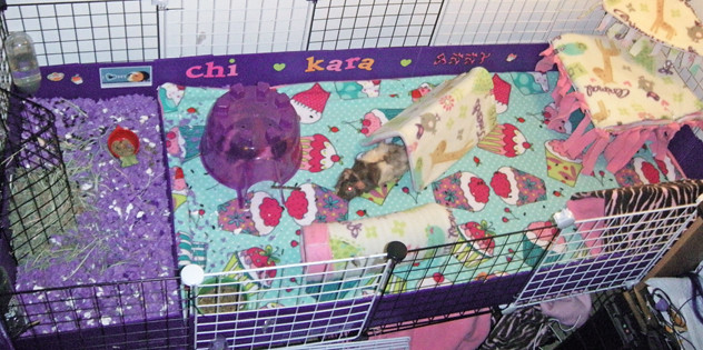 Cute Guinea Pig Cages Guinea Pig Cage | by