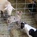 Wednesday random lamb photos 1