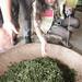 Nantau Tea Farm-40.jpg