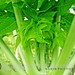 Green leaf - 1