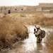 Marines sweep uncharted areas of Khan-Neshin during Operation Highland Thunder [Image 10 of 11]