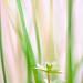 20120414_DSC9868.jpg