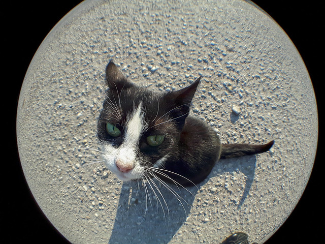 Shot with: Samsung Galaxy S5 Neo & Fisheye lens (TaoTronics Phone Camera Lens Clip Kit)