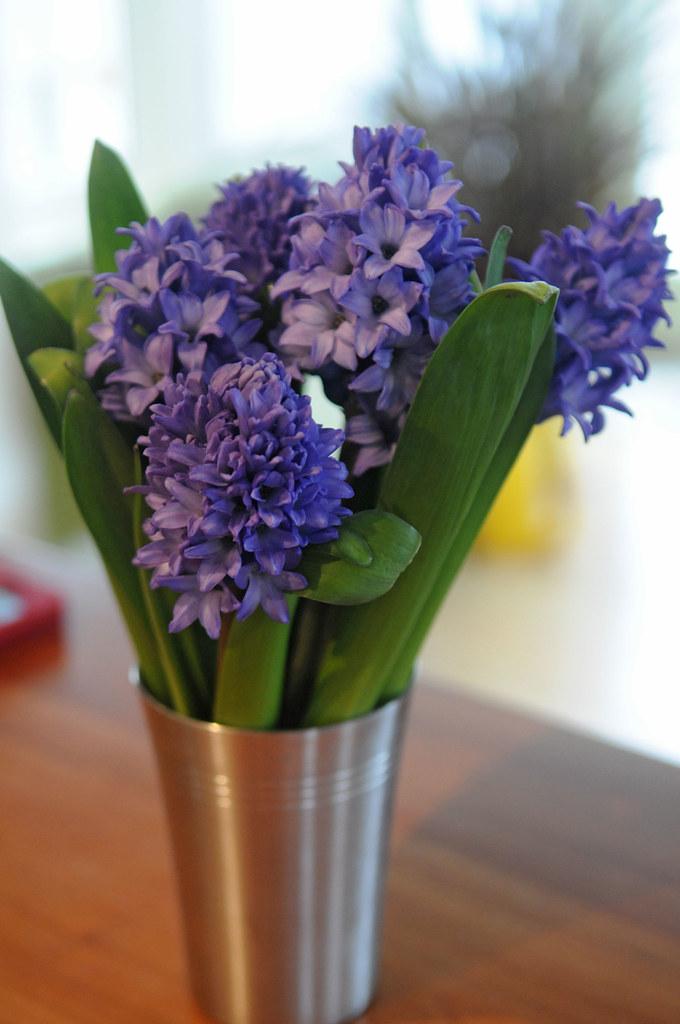 Hyacinths Winter Bouquets Gardener 39 S Supply Flickr