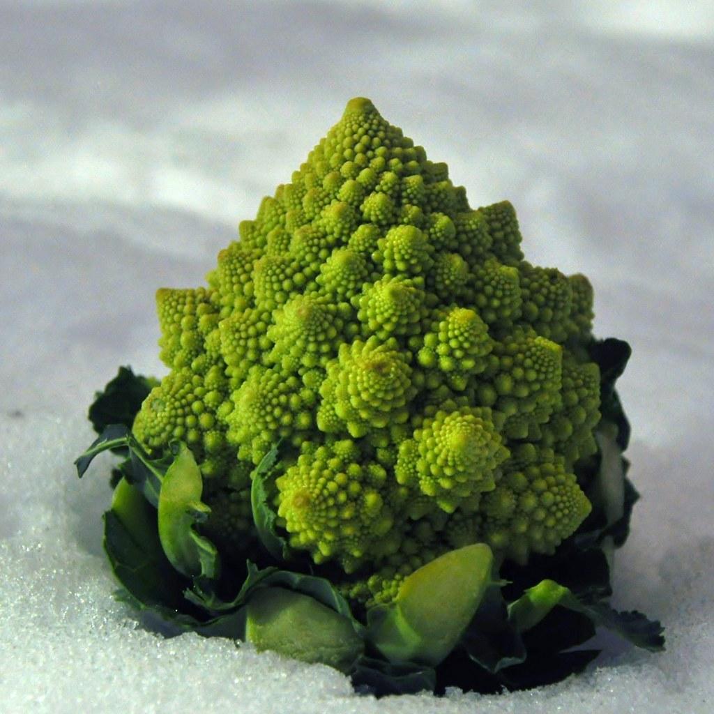 Photogenic Vegetable