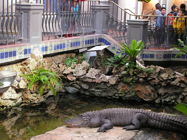 Old Steinhart Aquarium Alligator Flickr Photo Sharing