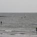 Paddlesurfers & windsurfers パドルサーファーとウィンドサーファー