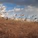 Meadowlands / Secaucus 4