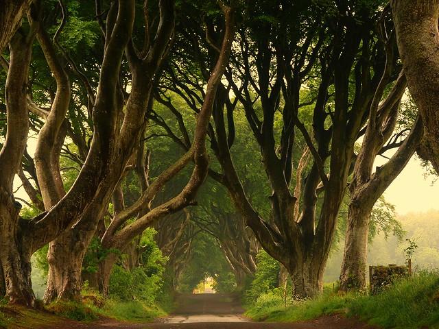 The Dark Hedges (Escenario de la Ruta de Juego de Tronos en Irlanda del Norte)