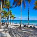 Palm Trees Shaded Beach with Lounge Chairs, Isla Verde, San Juan, Puerto Rico