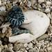 Photo Friday: Green Tree Monitor (February 24, 2012)