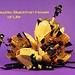 Quasorlix: Blacktron Flower of Life