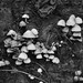 231111-blair-castle-lime-fungi