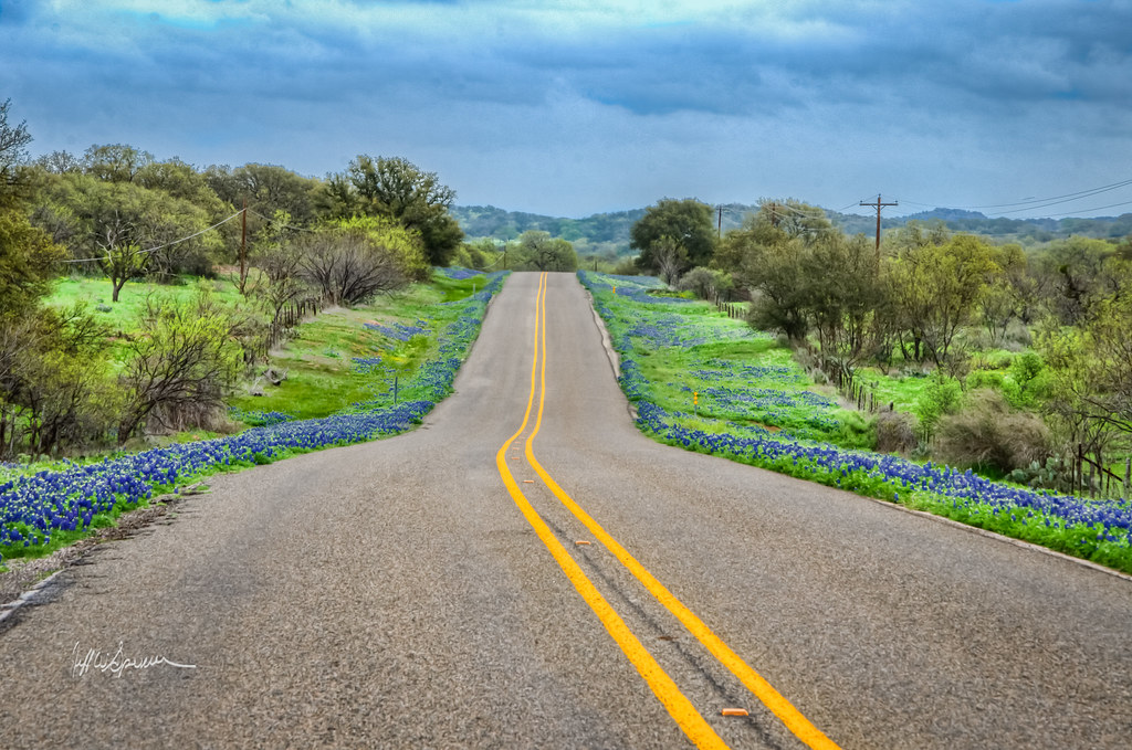 Texas Bluebonnets On Farm To Market Road 2323 Between