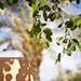 Shadows of Leaves