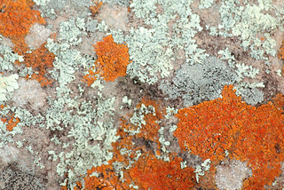 I lichen this color combo ;-) | by Geninne