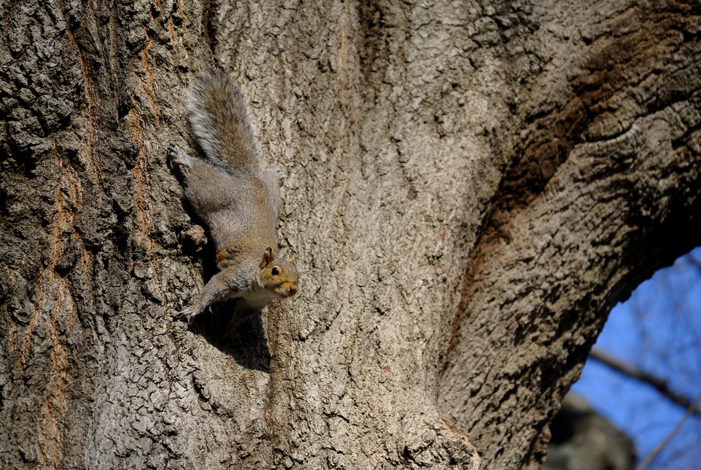 Is Squirrel Ok To Eat In Bible Food Laws