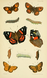 n176_w1150 | by BioDivLibrary