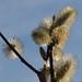 wiosna Frühling spring 2012