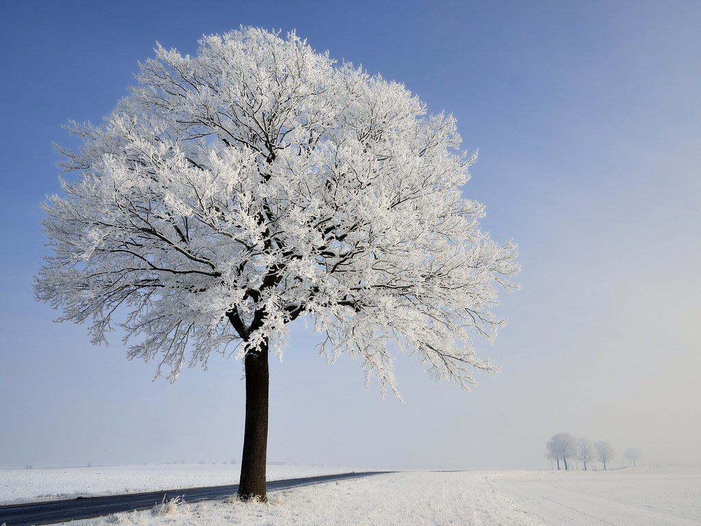 Image Result For Frozen