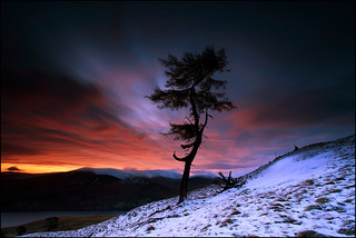 Larch Tree Dawn Loch Tay | by angus clyne