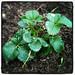Garden_20120225_1