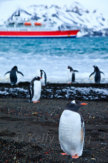 Antarctica-111122-309 | by Kelly Cheng