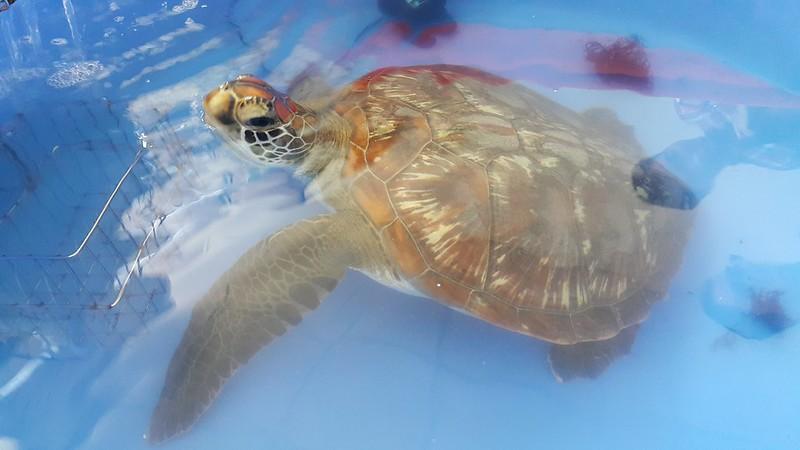 幸運自流刺網中逃過一劫的潮境。圖片來源:蔡馥嚀。