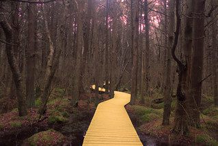kinda like a yellow brick road but not | by (kelly chase)