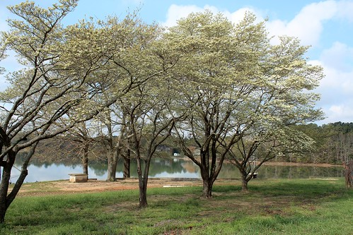 Robinwood Lake Fishing Dogwoods at Robinwood Lake