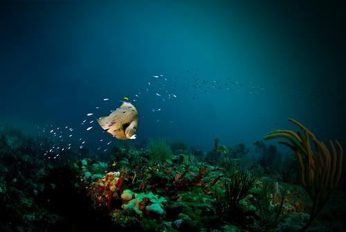 Angle Reef | by sub marine