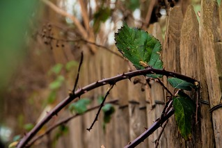 Happy Thorny Fence Friday ☺Explored | by Phototropy