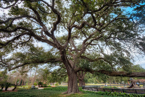 Audubon Oak Tree | by todd landry photography