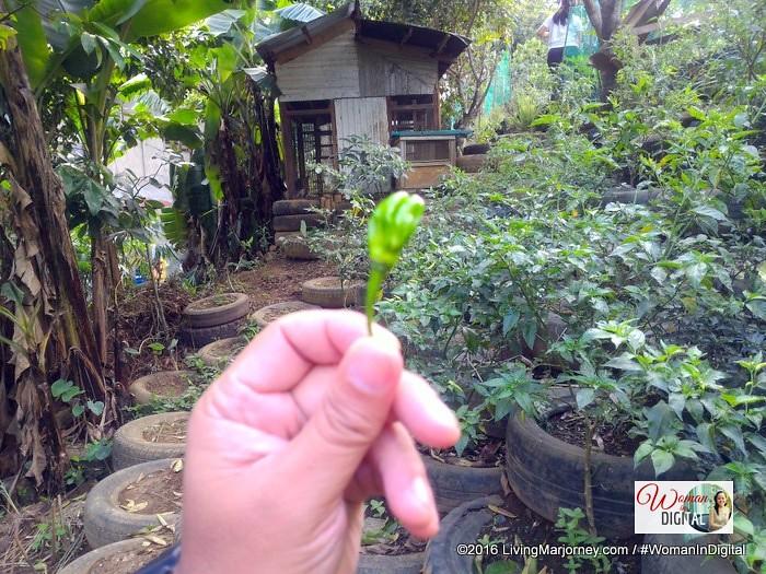 LivingMarjorney-Jaya-Secret-Garden-040