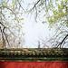 Peking spring