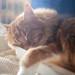Cat #132/366