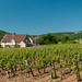 Vineyards near Gevrey-Chambertin
