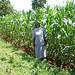 leonida with maize