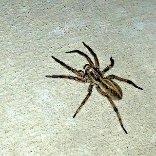 Peter Parker, chilling outside of my house. Huge! | by Frederick Van Johnson