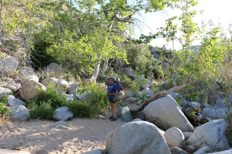 A dry creekbed with more moisture than usual, including Sycamore Trees, water plants, and shade