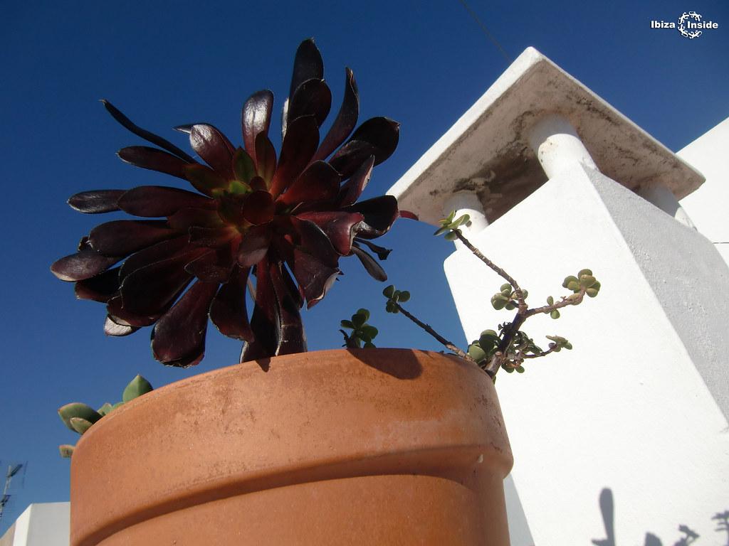 Ibiza Flower in pot virgil brewster