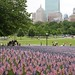 Thousands of U.S. flags for fallen soldiers.