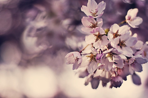 Blossoms | by GregPierceImages