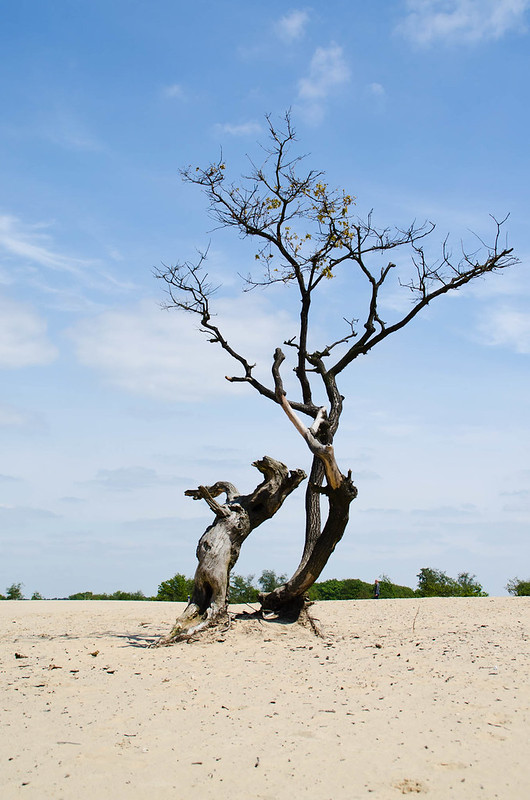 Natuurfotografie - Prachtige natuurfoto's - Loonse en Drunense Duinen