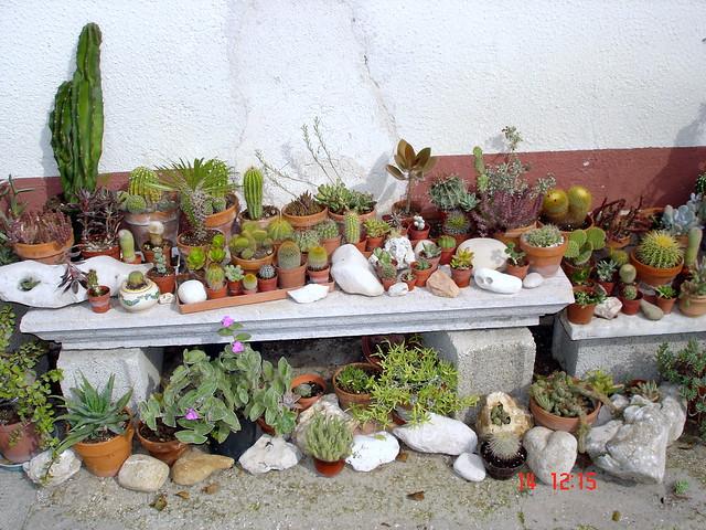 il mio giardino roccioso o collezione di pietre e piante g