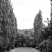 Schwenkpanorama vom Friedhof Blumengarten