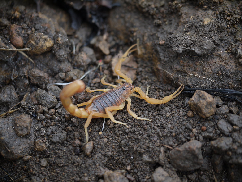 World's Deadliest Scorpion? | National Geographic - YouTube