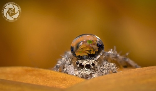 Spider & Drop | by RASHID ALKUBAISI