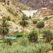 Encantadora, Vallehermoso, La Gomera